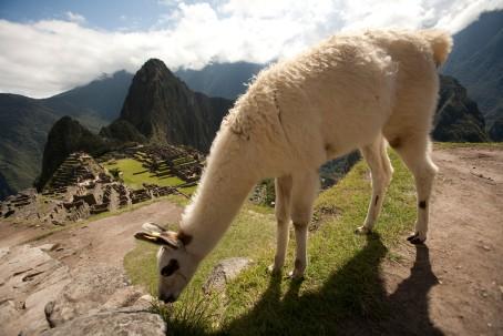 Ciudadela de Machu Picchu 11