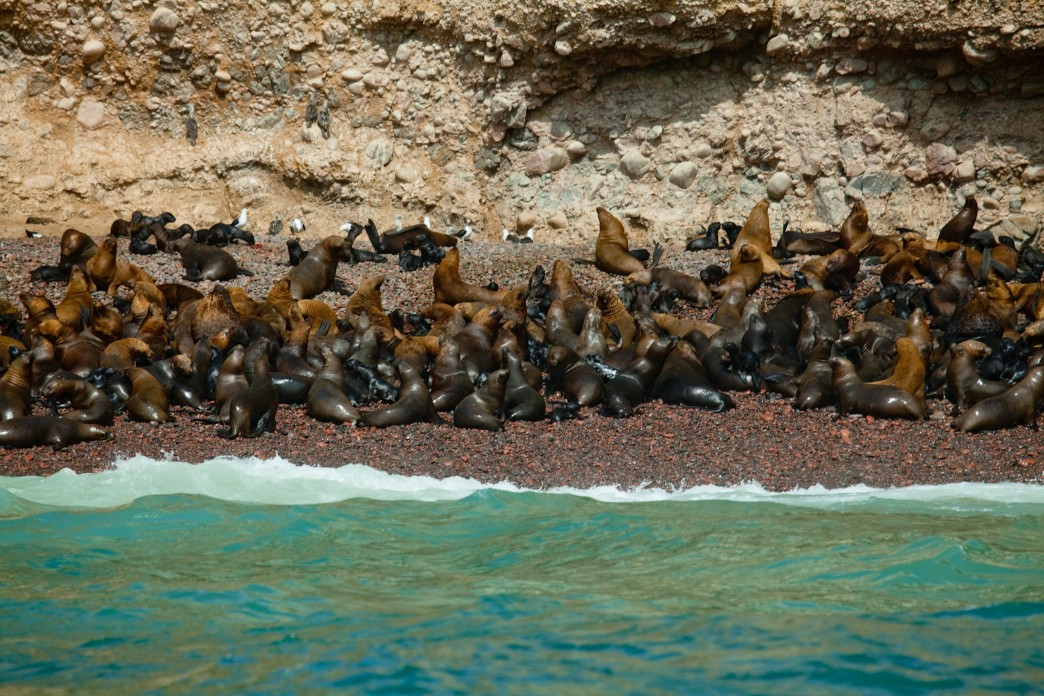 Réserve nationale de Paracas - Voyage au Pérou
